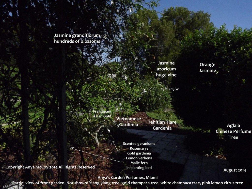 Anya's front perfumed garden
