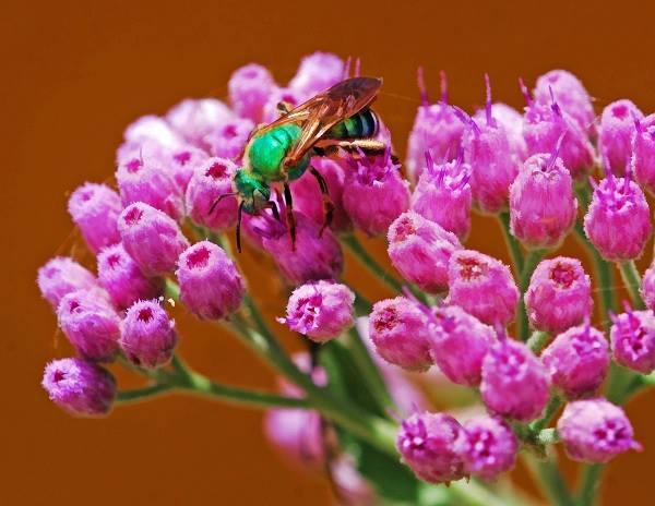 marklenz-green-orchard-bee-arcadia-fl