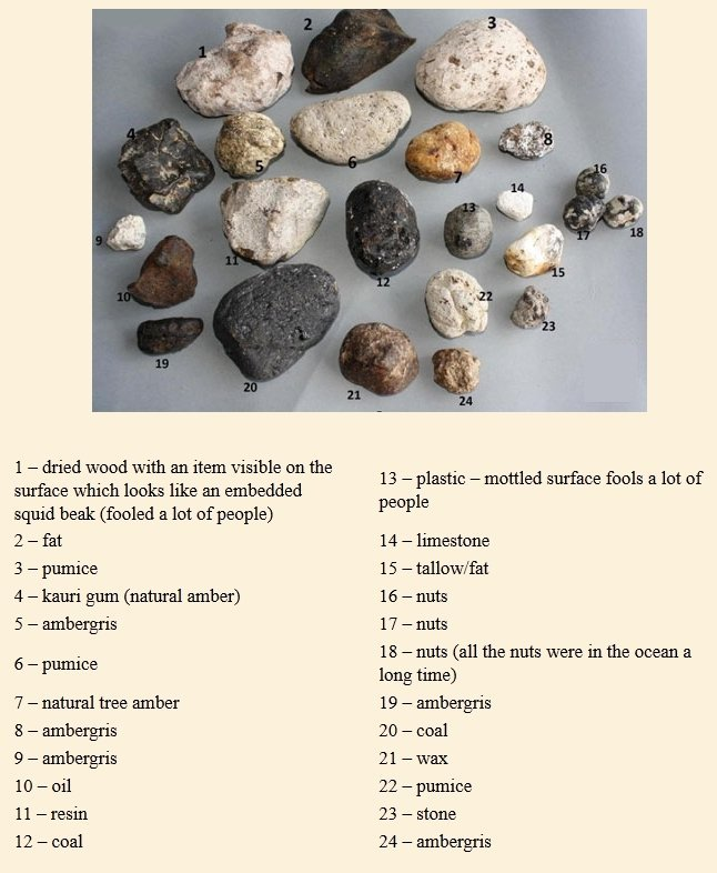 An ambergris ID photo and list of frequently misidentified objects