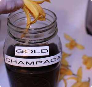 Anya McCoy making gold champaca tincture