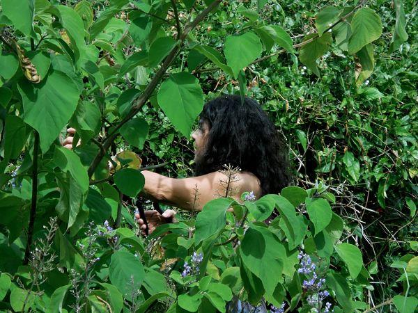 Julia harvesting cornutia