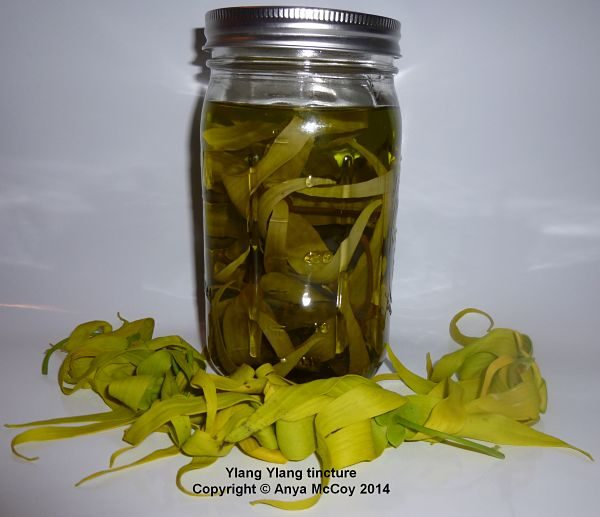 Yellow ylang ylang flowers turn the tincture green, and get darker with each recharge. The scent is very, very strong! Beautiful