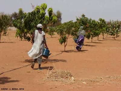 green wall women farmers